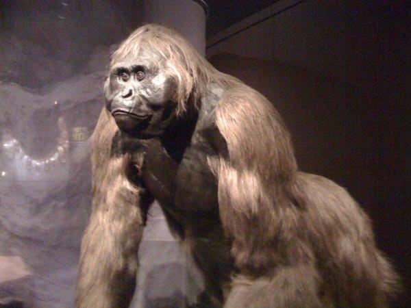 Gigantopitheque