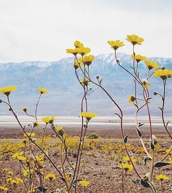 fleurs-valleedelamort