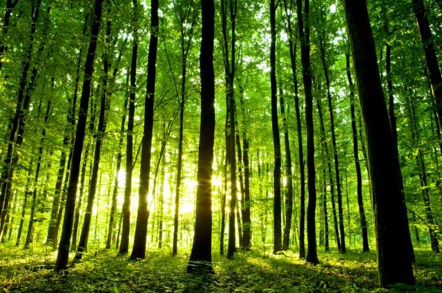 arbres-2