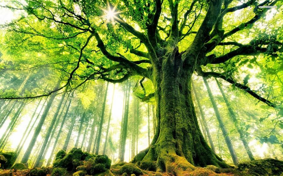 arbres-5