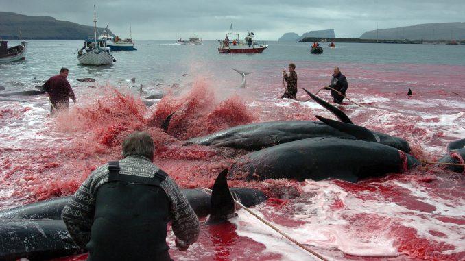peche-baleine-japon