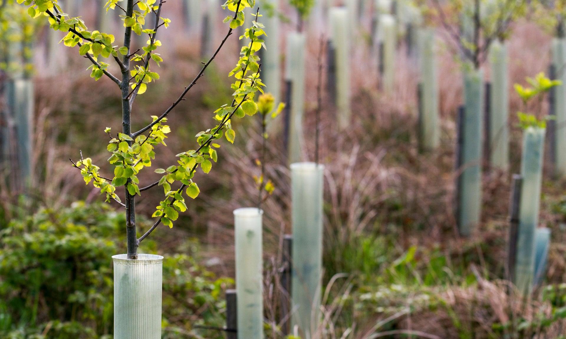 arbres-plantations