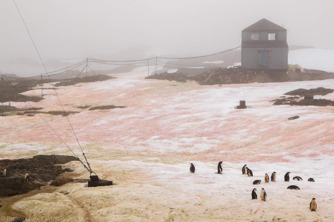 neige-verte-et-rouge-sang-antarctique-fevrier2021-1