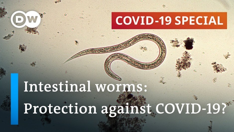 Coronavirus: Are parasitic worms accountable for low fatality charges in Africa?   COVID-19 Particular