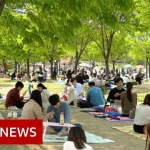 Coronavirus: How South Korea 'crushed' the curve – BBC Information