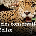 Belize: Animal safety through the coronavirus pandemic | International Concepts