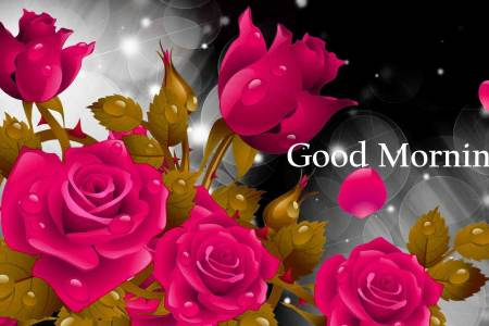 157  Good Morning Flowers Images Photos Pics HD Download Here good morning flowers rose