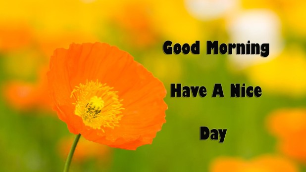Images Good Morning Have A Nice Day Quotes