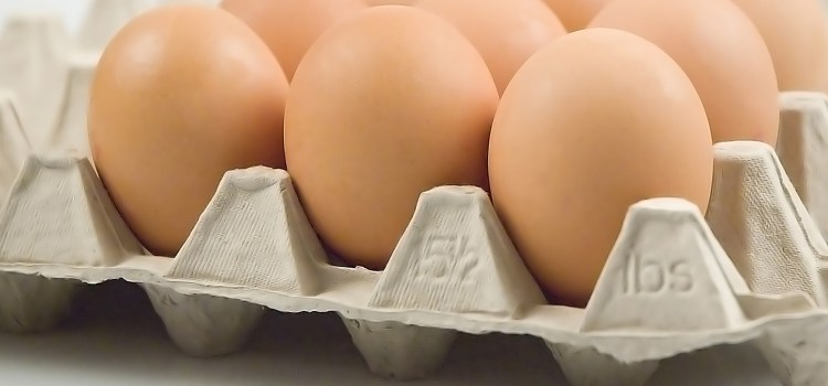 Eggs of Justice