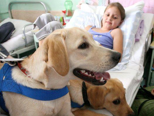 pet-therapy-latina-24ore-78098225