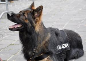 cane-polizia-latina-24ore-7768351