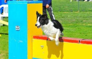 agility-dog-latina-998342