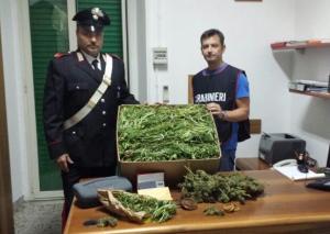 marijuana-sequestro-spigno-saturnia-latina24ore