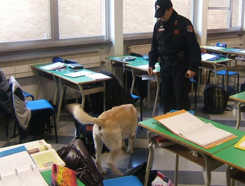 cane-cani-antidroga-ispezione