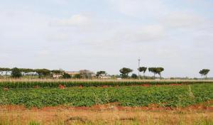 area-centrale-biogas-latina