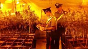 laboratorio-marijuana-itri