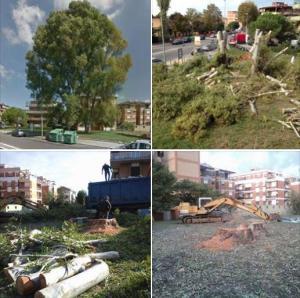 albero-tagliato-via-quarto-latina