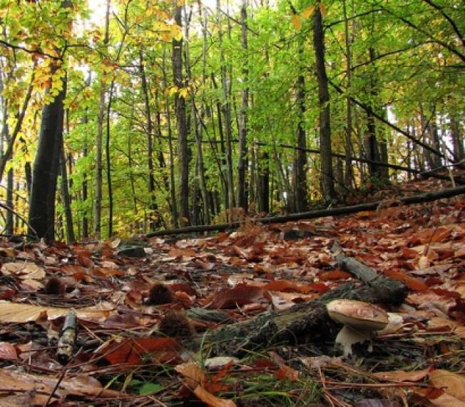 bosco-funghi