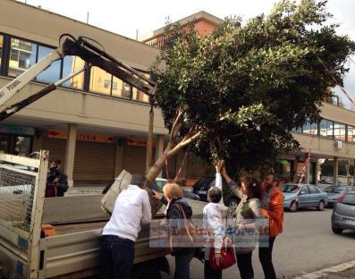 albero-gigante-buono-latina