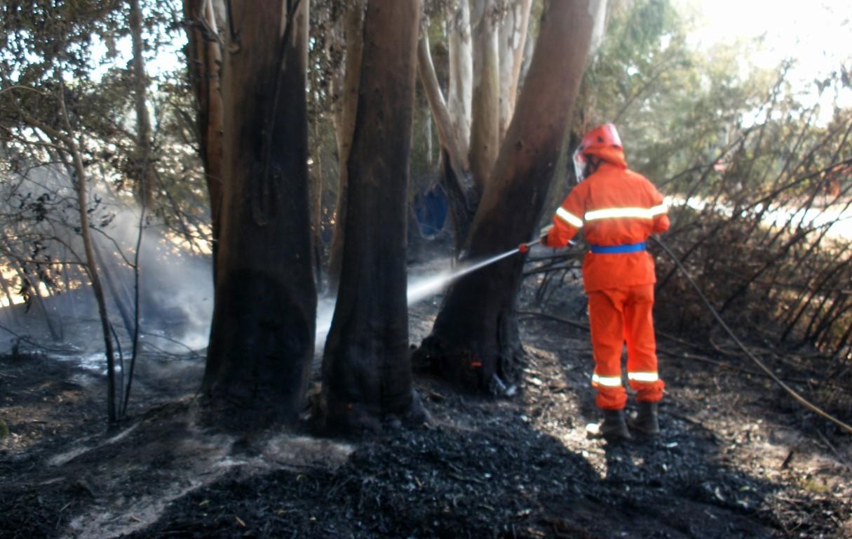 incendio-bosco-protezione-civile