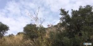 elicottero-vigili-fuoco-latina-norma