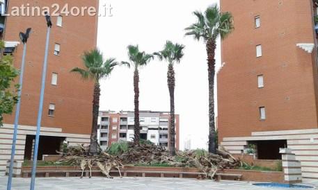 1latina-giardino-palme-campo-boario-volontari-lavoro-1