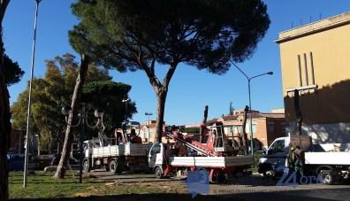latina-viale-italia-alberi-tagliati-2