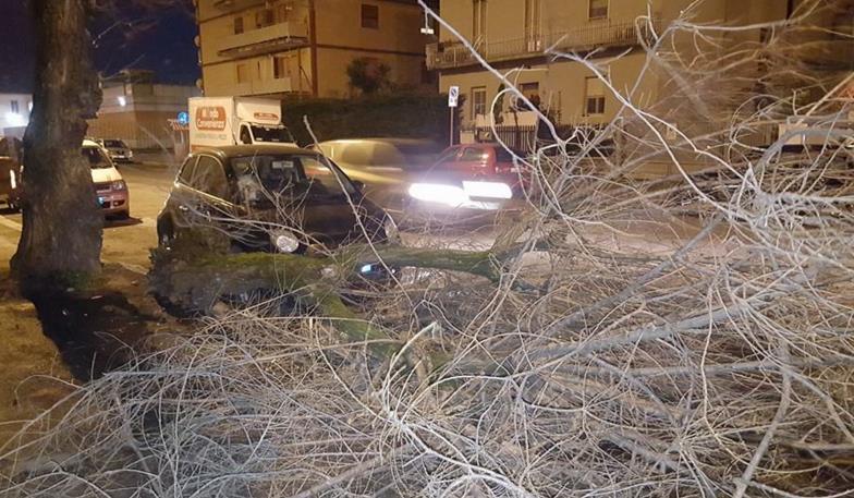 albero-caduto-latina-strada-1