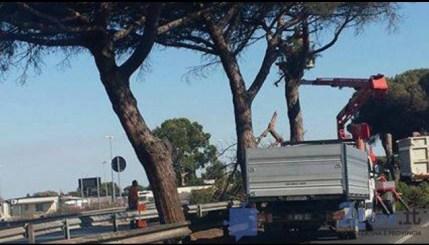 taglio-alberi-pontina-2016-5