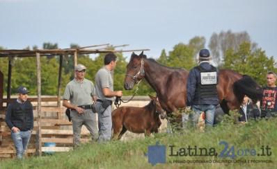 sgombero-terreni-cavalli-disilvio-latina-11