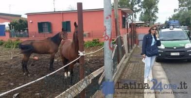 sgombero-terreni-cavalli-disilvio-latina-4