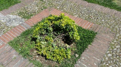 degrado-piazza-popolo-piante-latina-3
