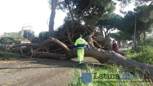 maltempo-latina-vento-danni-3