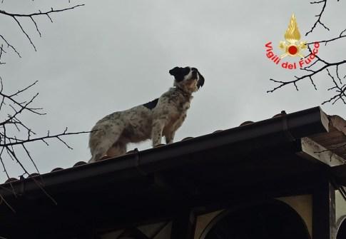cane-salvato-vigili-fuoco-1