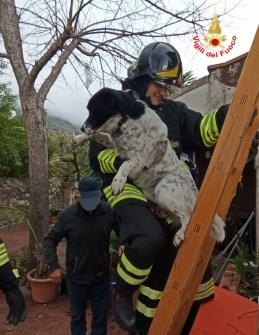 cane-salvato-vigili-fuoco-2