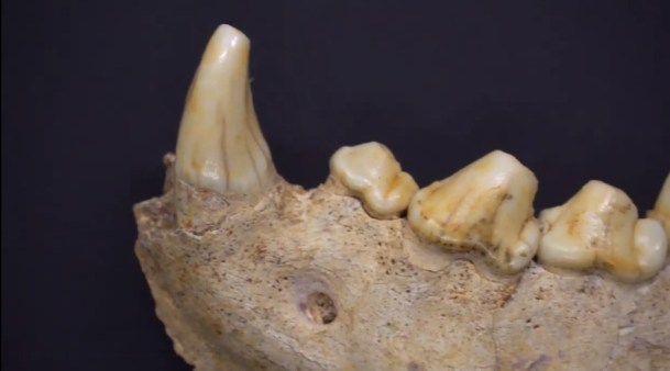 circeo-scoperta-uomini-neanderthal-3