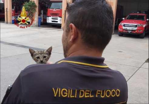 gatta-salvata-vigili-fuoco3
