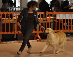 concorso-bellezza-cani-latina-21