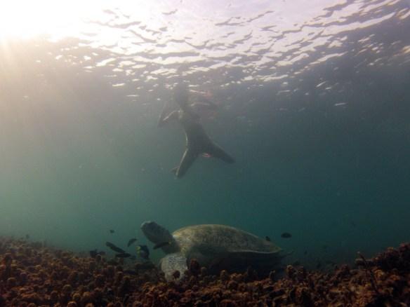 Shark Bay, best of Koh Tao snorkeling