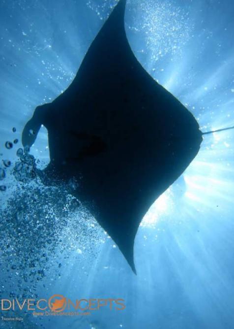 Nusa Penida diving, Manta Point