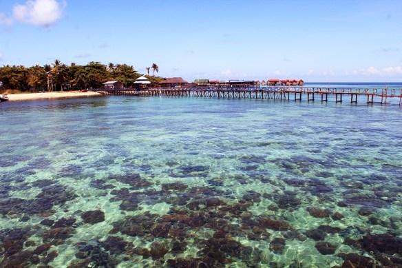 Malaysian Borneo coral, Mabul Island