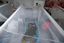 Central America's Dengue Epidemic Deadly in Honduras