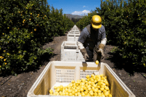 How Coronavirus Threatens the Seasonal Farmworkers at the Heart of the American Food Supply