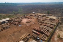 Deforestation in the Brazilian Amazon May Be at 14 Year High