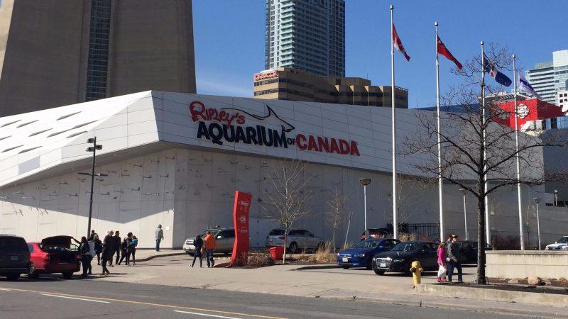 Aquário em Toronto: Ripley's Aquarium of Canada