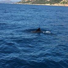 delfini la caletta Sardegna