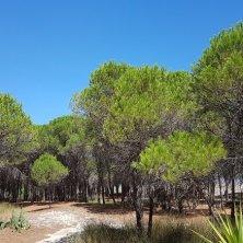 pineta sa petra Sardegna