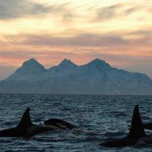 orche alle Lofoten