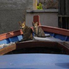 gatti sulla barca