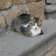 gatto a Civita